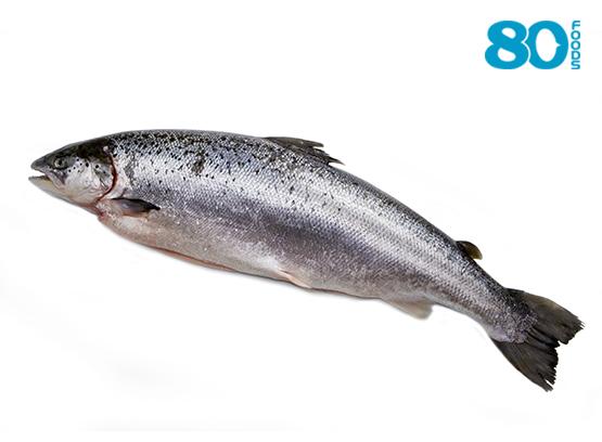 Cá hồi Nauy nguyên con (Size 5-6)