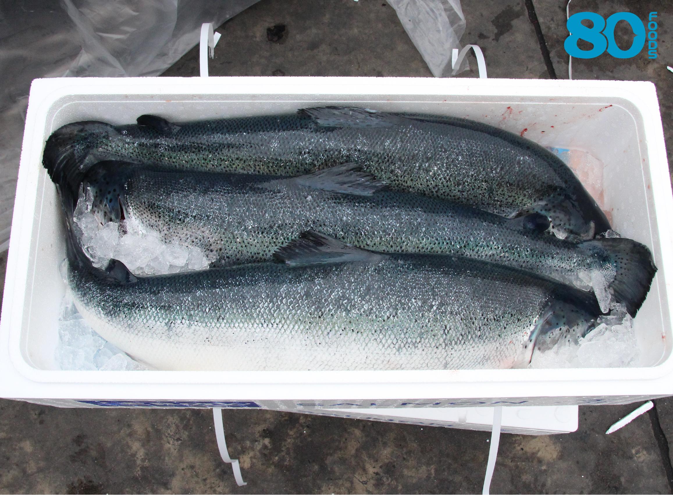 Cá hồi NaUy Organic là gì